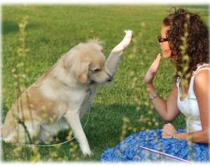 アレルギーでも犬を飼いたい方はご相談ください 優良ブリーダー直の